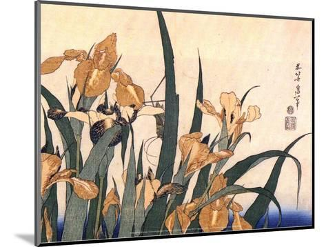 Convolvulus and Tree Frog-Hokusai Hokusai-Mounted Art Print