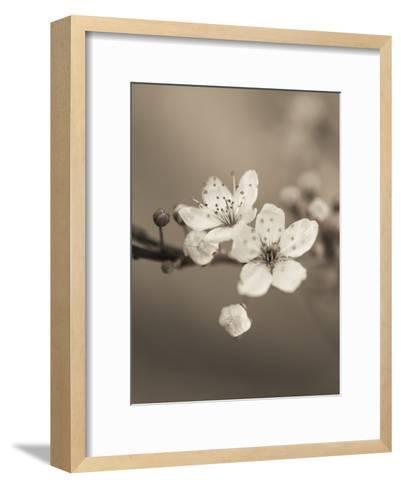 Blossom Duet-Assaf Frank-Framed Art Print