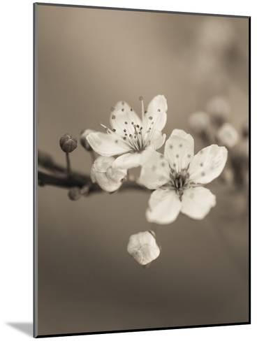 Blossom Duet-Assaf Frank-Mounted Giclee Print