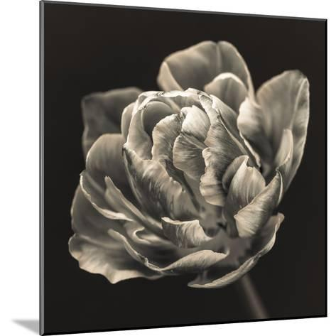 Tulipana Still-Assaf Frank-Mounted Giclee Print