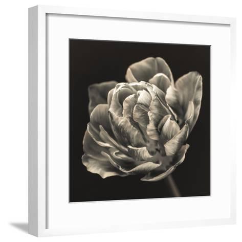 Tulipana Still-Assaf Frank-Framed Art Print