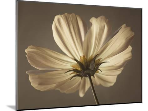 Cosmos Reflect-Assaf Frank-Mounted Giclee Print