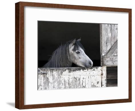 Texas Beauty-Assaf Frank-Framed Art Print
