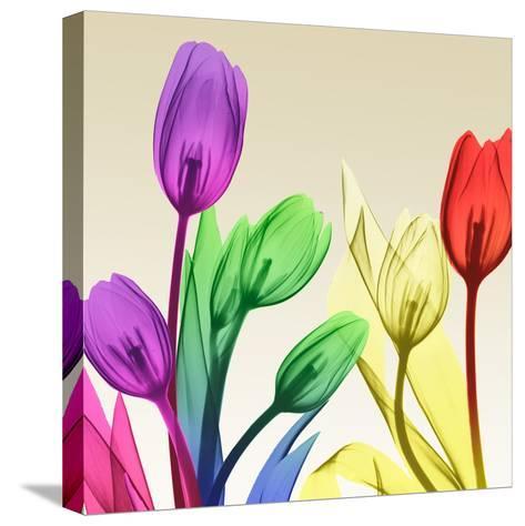 Floral Splurge 2-Albert Koetsier-Stretched Canvas Print