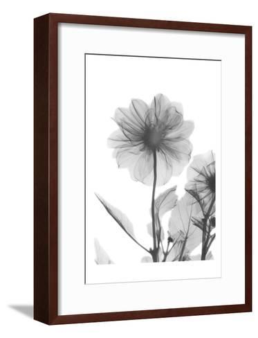 Dahlia Twins-Albert Koetsier-Framed Art Print