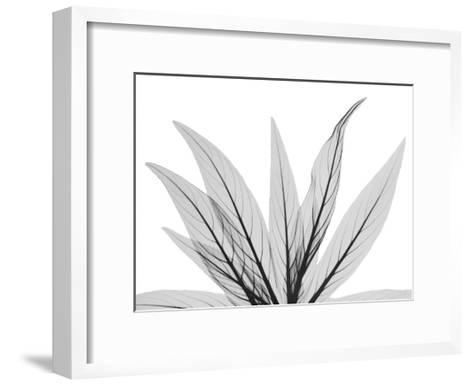 Luminous Fern 1-Albert Koetsier-Framed Art Print