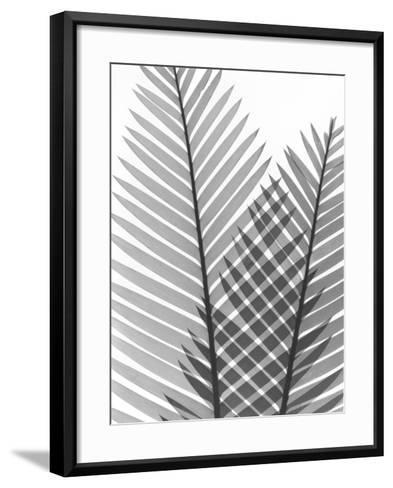 Tropical Fern 1-Albert Koetsier-Framed Art Print