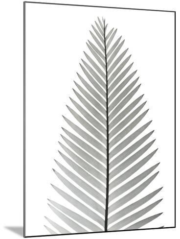Tropical Fern 2-Albert Koetsier-Mounted Art Print