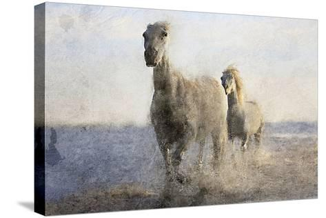 Running Free-Kimberly Allen-Stretched Canvas Print
