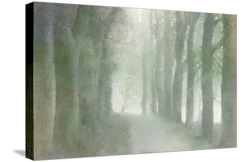Natural Walkway-Kimberly Allen-Stretched Canvas Print
