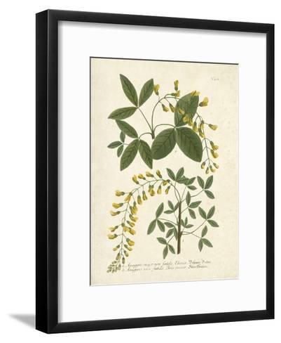 Botanica Anagyris-The Vintage Collection-Framed Art Print