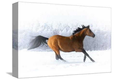 Pop of Color Running Horse-Color Me Happy-Stretched Canvas Print