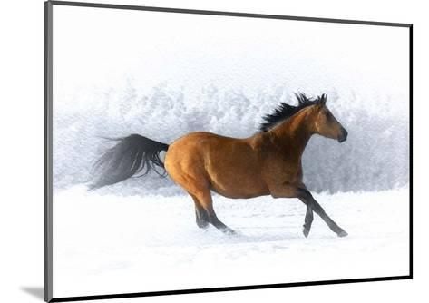 Pop of Color Running Horse-Color Me Happy-Mounted Art Print