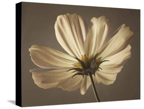 Cosmos Reflect-Assaf Frank-Stretched Canvas Print