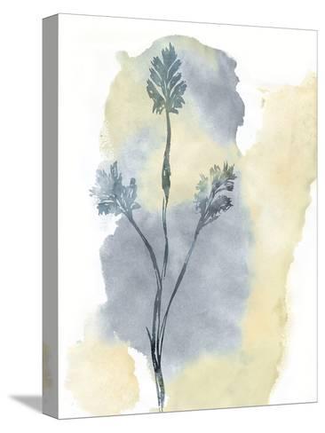 Wildflower Ensemble-Tania Bello-Stretched Canvas Print