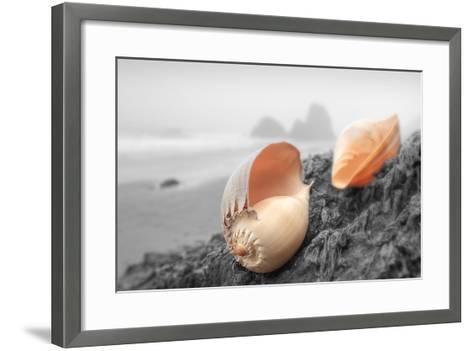 Crescent Beach Shells #20-Alan Blaustein-Framed Art Print