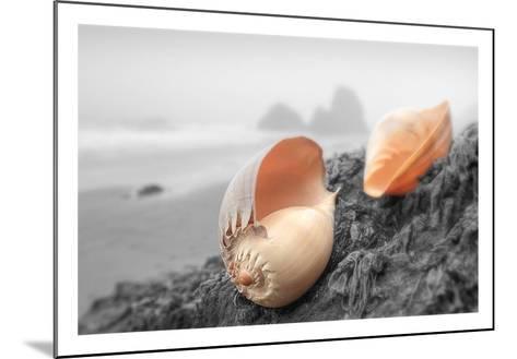 Crescent Beach Shells #20-Alan Blaustein-Mounted Art Print