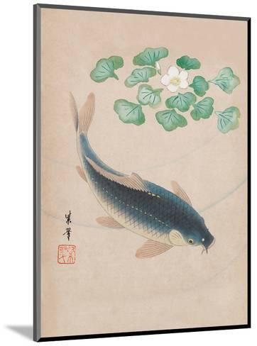 Carp with Water Flowers--Mounted Art Print