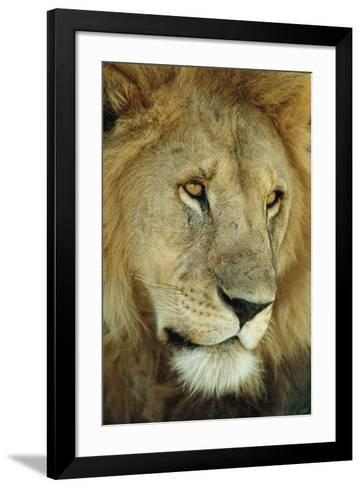 King's Gaze-Staffan Widstrand-Framed Art Print