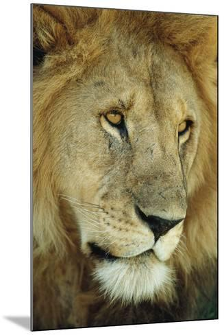 King's Gaze-Staffan Widstrand-Mounted Giclee Print