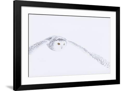 In Pursuit-Staffan Widstrand-Framed Art Print