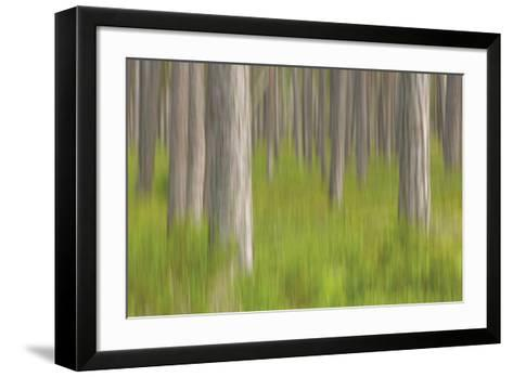 Forest Fresh-Staffan Widstrand-Framed Art Print