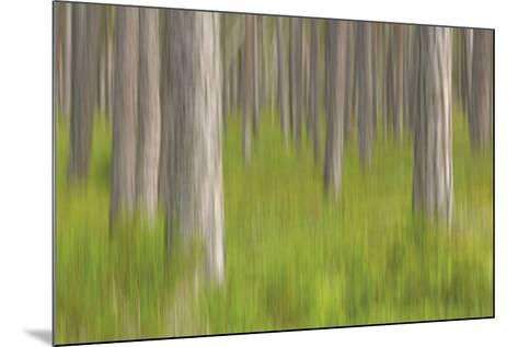 Forest Fresh-Staffan Widstrand-Mounted Giclee Print