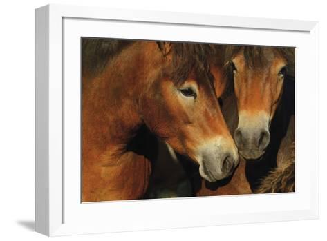 United-Staffan Widstrand-Framed Art Print