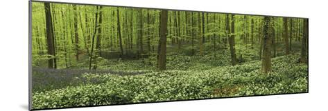 Woodland Melody-Wild Wonders of Europe-Mounted Giclee Print