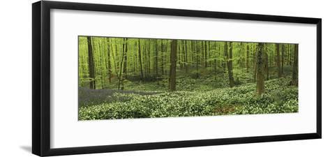 Woodland Melody-Wild Wonders of Europe-Framed Art Print