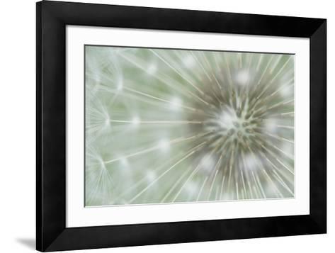 Dandelion Focus-Wild Wonders of Europe-Framed Art Print