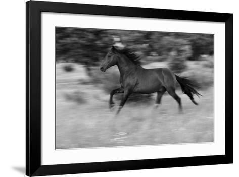 Chestnut Bolt-Staffan Widstrand-Framed Art Print