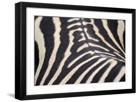 Zebra Stripes-Staffan Widstrand-Framed Art Print