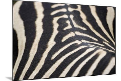Zebra Stripes-Staffan Widstrand-Mounted Giclee Print