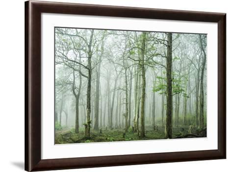 Forest Melody-Bobby Joshi-Framed Art Print