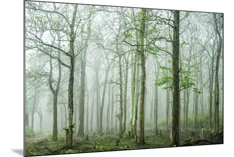 Forest Melody-Bobby Joshi-Mounted Giclee Print