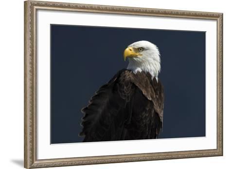 Eagle Ahead-Staffan Widstrand-Framed Art Print