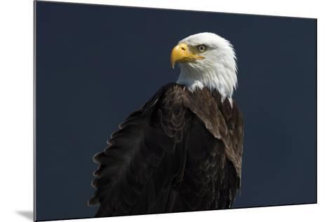 Eagle Ahead-Staffan Widstrand-Mounted Giclee Print