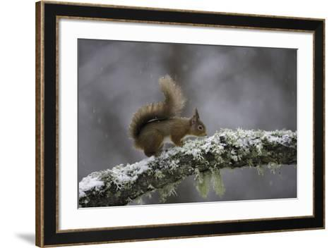 Ready for Action-Wild Wonders of Europe-Framed Art Print