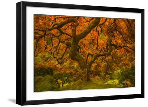 Radiant Maple II-Don Schwartz-Framed Art Print