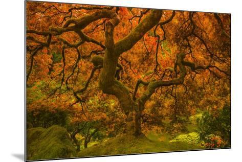 Radiant Maple II-Don Schwartz-Mounted Art Print