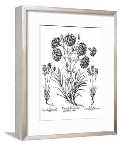 Besler 11- New York Botanical Garden-Framed Art Print