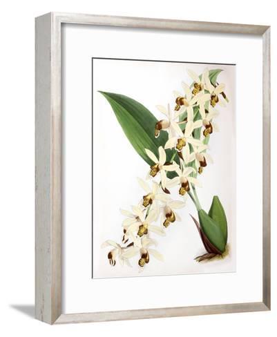 Fitch Orchid Caelogyne Massangena- New York Botanical Garden-Framed Art Print