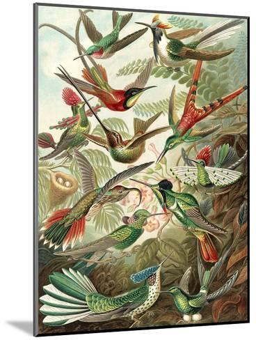 Hummingbirds-Found Image Press-Mounted Art Print