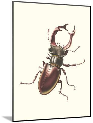 Staghorn Beetle-Found Image Press-Mounted Art Print