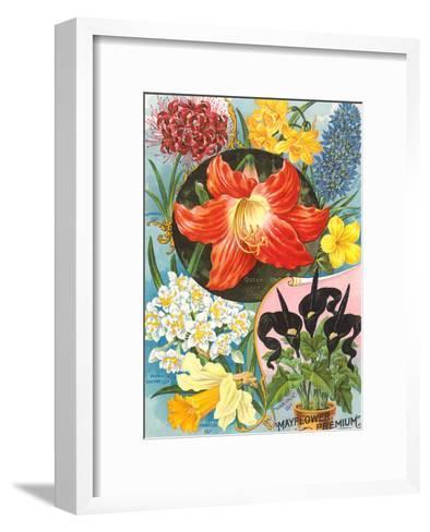 Mayflower Seed Packet-Found Image Press-Framed Art Print