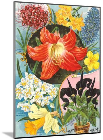 Mayflower Seed Packet-Found Image Press-Mounted Art Print
