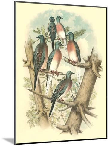 Pink-Breasted Doves-Found Image Press-Mounted Art Print