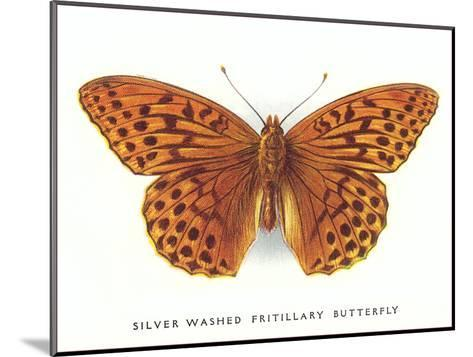 Silver-Washed Fritillary Butterfly-Found Image Press-Mounted Art Print
