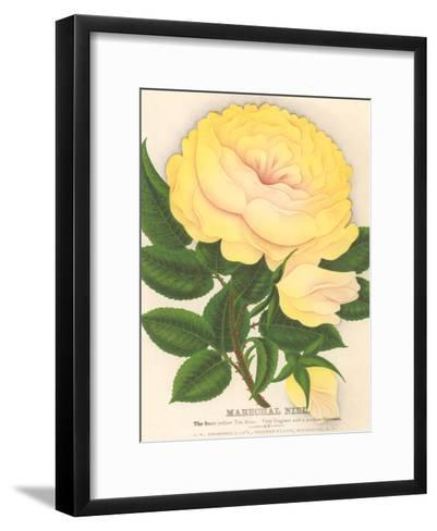 Yellow Tea Rose-Found Image Press-Framed Art Print